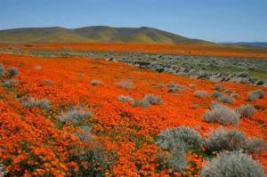 California (by Jack Tamrong : lannafocus.com)